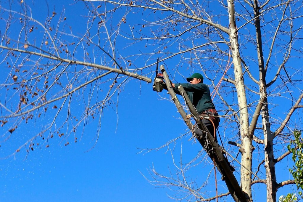 Contact Us-Fort Meade FL Tree Trimming and Stump Grinding Services-We Offer Tree Trimming Services, Tree Removal, Tree Pruning, Tree Cutting, Residential and Commercial Tree Trimming Services, Storm Damage, Emergency Tree Removal, Land Clearing, Tree Companies, Tree Care Service, Stump Grinding, and we're the Best Tree Trimming Company Near You Guaranteed!