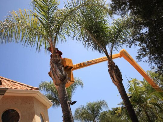 Palm Tree Trimming-Fort Meade FL Tree Trimming and Stump Grinding Services-We Offer Tree Trimming Services, Tree Removal, Tree Pruning, Tree Cutting, Residential and Commercial Tree Trimming Services, Storm Damage, Emergency Tree Removal, Land Clearing, Tree Companies, Tree Care Service, Stump Grinding, and we're the Best Tree Trimming Company Near You Guaranteed!