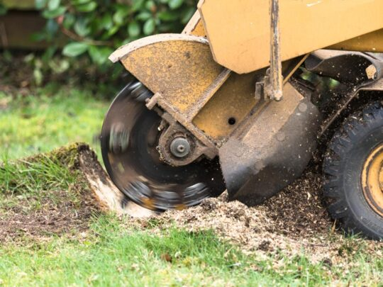 Stump Grinding-Fort Meade FL Tree Trimming and Stump Grinding Services-We Offer Tree Trimming Services, Tree Removal, Tree Pruning, Tree Cutting, Residential and Commercial Tree Trimming Services, Storm Damage, Emergency Tree Removal, Land Clearing, Tree Companies, Tree Care Service, Stump Grinding, and we're the Best Tree Trimming Company Near You Guaranteed!