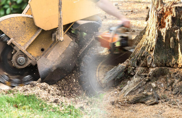 Stump grinding & removal-Fort Meade FL Tree Trimming and Stump Grinding Services-We Offer Tree Trimming Services, Tree Removal, Tree Pruning, Tree Cutting, Residential and Commercial Tree Trimming Services, Storm Damage, Emergency Tree Removal, Land Clearing, Tree Companies, Tree Care Service, Stump Grinding, and we're the Best Tree Trimming Company Near You Guaranteed!