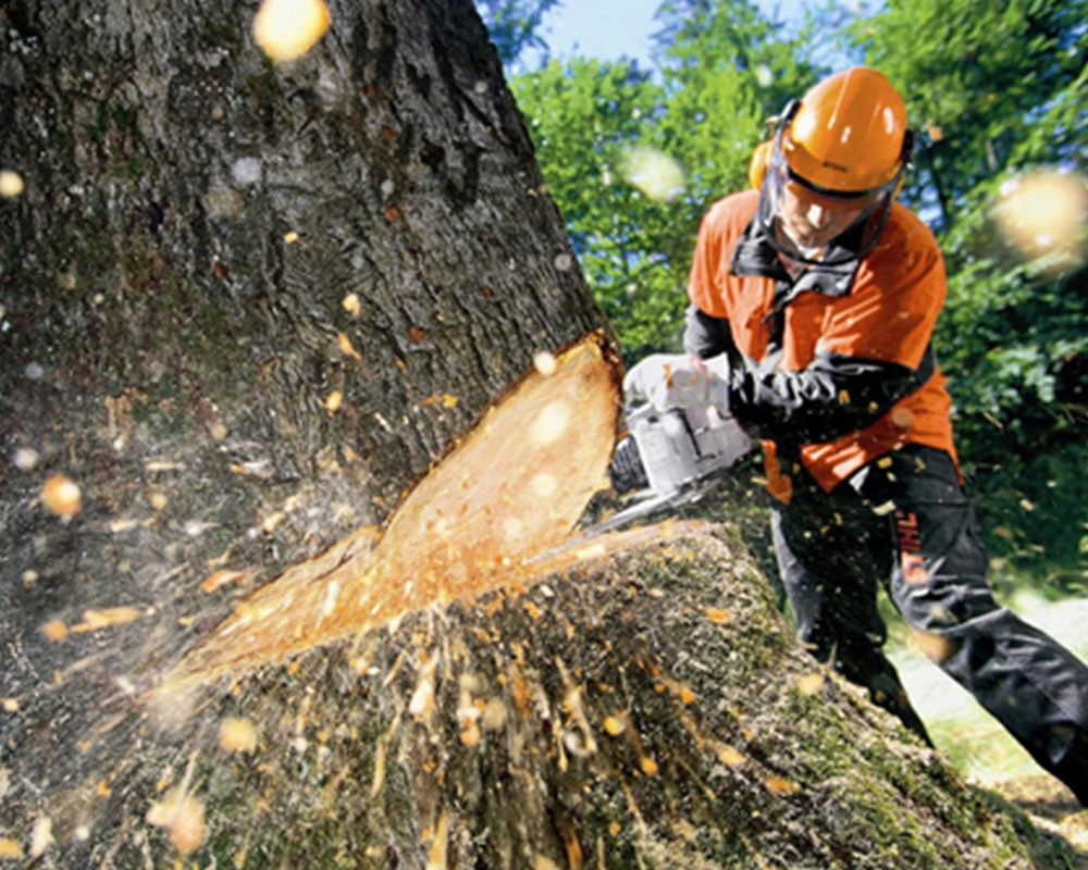 Tree Cutting-Fort Meade FL Tree Trimming and Stump Grinding Services-We Offer Tree Trimming Services, Tree Removal, Tree Pruning, Tree Cutting, Residential and Commercial Tree Trimming Services, Storm Damage, Emergency Tree Removal, Land Clearing, Tree Companies, Tree Care Service, Stump Grinding, and we're the Best Tree Trimming Company Near You Guaranteed!